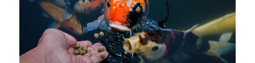 Comida y comederos para peces